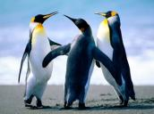 172x117_penguins___copia7ba463a6.jpg